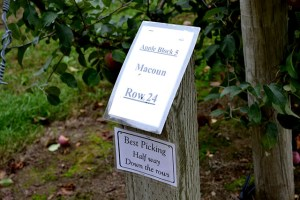Apple Picking_Cider Hill Farm_07