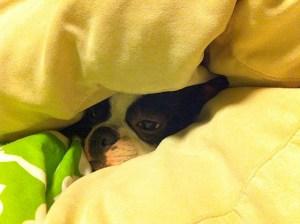 kemper in bed