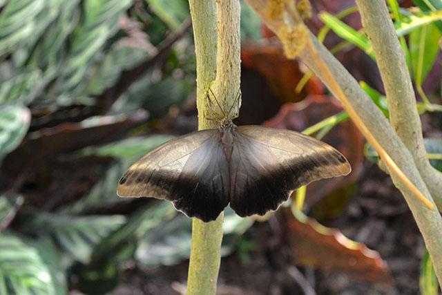 Key West Butterfly Conservatory_02
