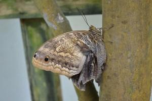 Key West Butterfly Conservatory_18