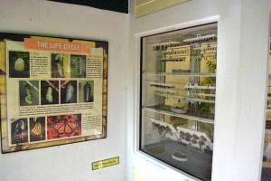 Key West Butterfly Conservatory_23