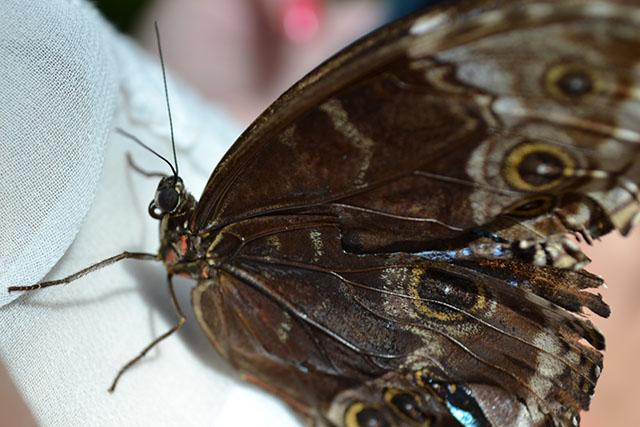 Key West Butterfly Conservatory_29
