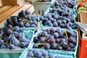 Applecrest Farm Apple Picking-5