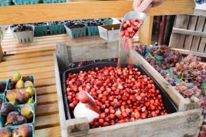 Applecrest Farm Apple Picking-6