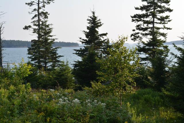 Maine Sunset-1