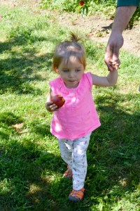 Apple Picking_Tougas Family Farm-17