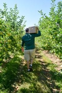 Apple Picking_Tougas Family Farm-8