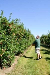 Apple Picking_Tougas Family Farm-9