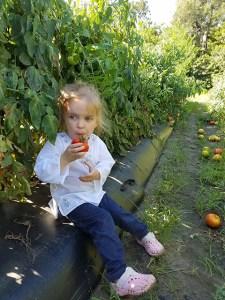 Tomato Picking_Apollo Beach_FL_10