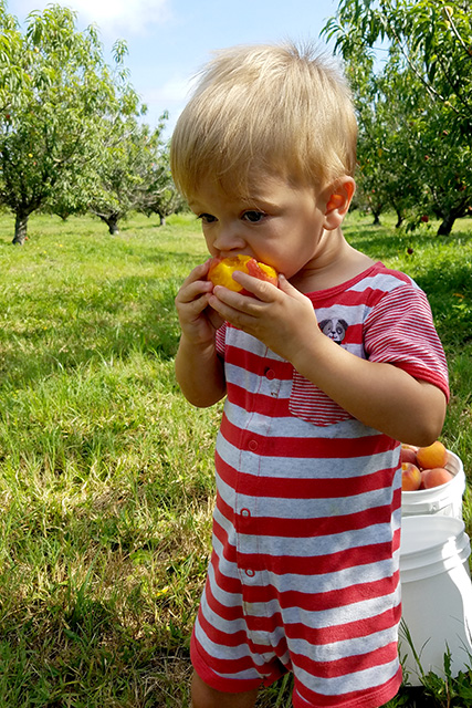 Close up of boy eating a peach at a peach tree farm