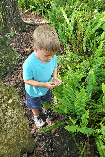 Little boy standing among ferns