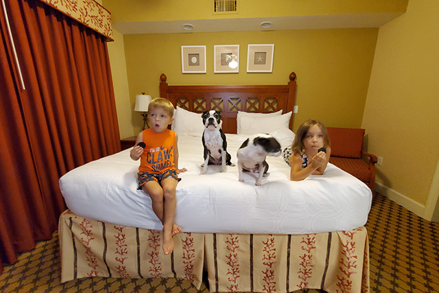 Kids and dogs sitting on hotel room bed in Westgate Town Center room