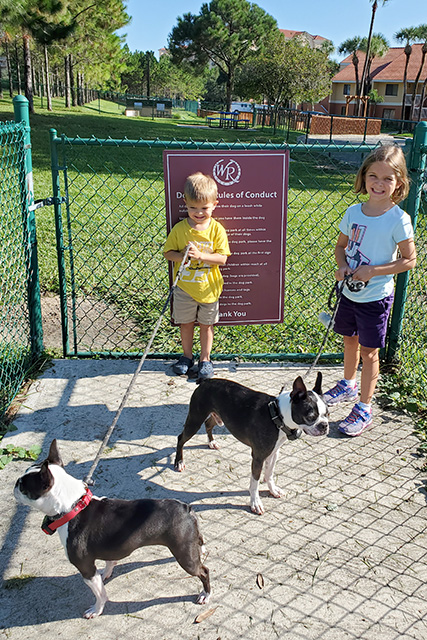 2 Kids holding leashes for dogs at Westgate Tower Resort