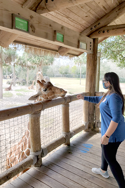 woman wearing blue shirt feeding giraffe at Jacksonville Zoo