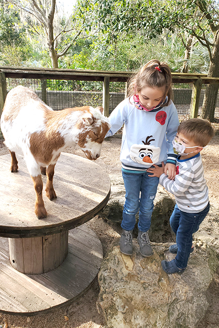 2 young kids petting a goat at a petting zoo at the Jacksonville Zoo