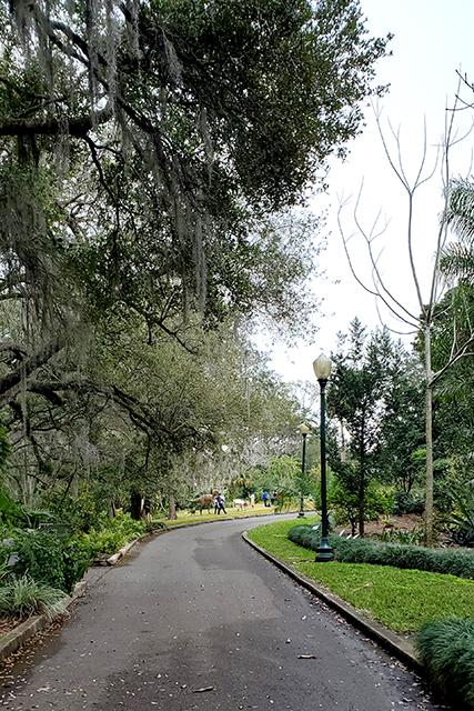 tree lined path a Leu Gardens