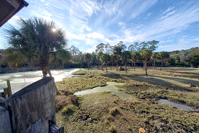 Animal Free ranging area at Africa Loop at Jacksonville Zoo and Gardens
