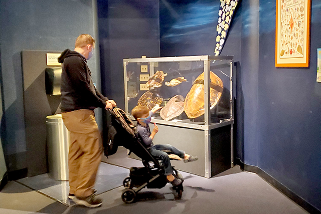 man pushing boy in a stroller in front of a turtle shell exhibit