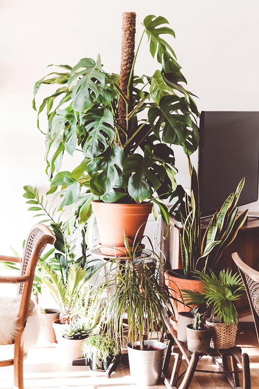 Cambios de otoño - plantas