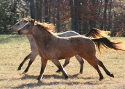 PEMF 8000 Therapy for Equine Changes on a Cellular Level