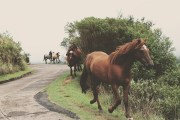 How PEMF Devices For Horses Works