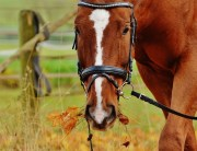 PEMF Equine Therapy Is A Valuable Tool
