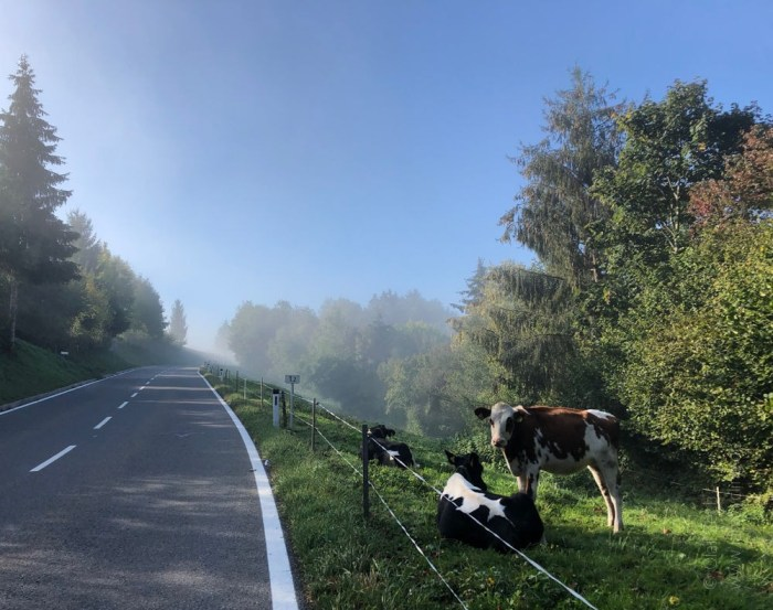 Rennrad Saisonfinale Bodensee: Der Nebel löst sich langsam auf