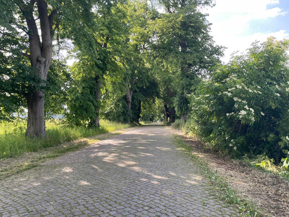 Kopfsteinpflaster vor Stralsund - Ostsee-Tour - iamcycling.de