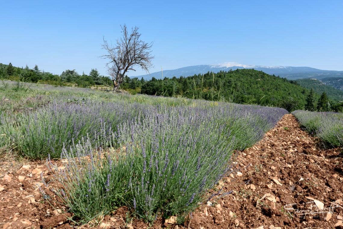 20170619_Provence_2021