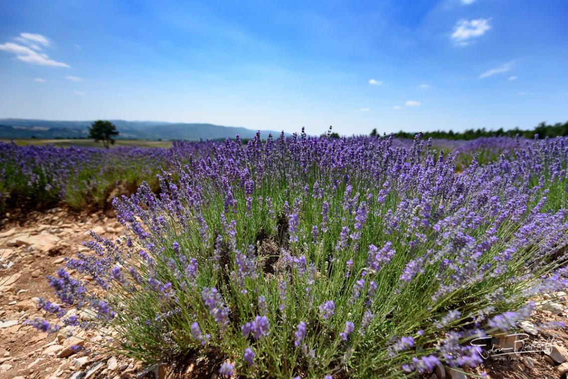 20170619_Provence_2040