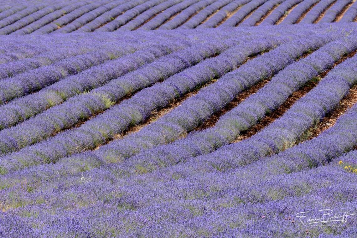 20170621_Provence_22244