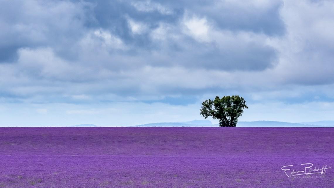 20170629_Provence_2962_1