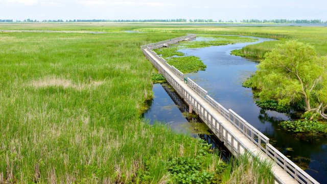Point-Pelee-National-Park