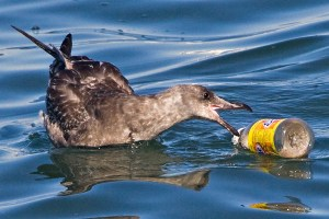 plastic pollution world oceans day