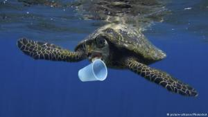 turtle encounters plastic world oceans day