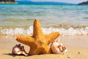 star fish world oceans day