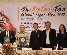 A MoU was signed on the conservation of tigers in Dong Phaya Yen - Khao Yai forests