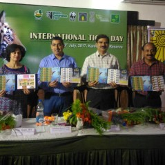 Collection of postage stamps released as part of tiger conservation efforts by using the 'My Stamp' service of the Department of Post at Kanha Tiger Reserve (from Satpuda Maikal Landscape)