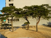 A Park at Dongdaemun