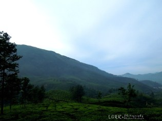 Tea Estates