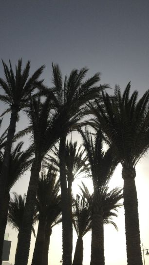 I can never get enough of palm trees...