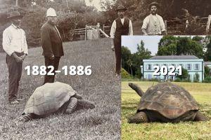 Jonathan the giant tortoise