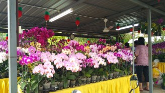 Not sure what's this nursery called. It's after Hee Garden. Gold satin clothed table with lots of pretty orchids.