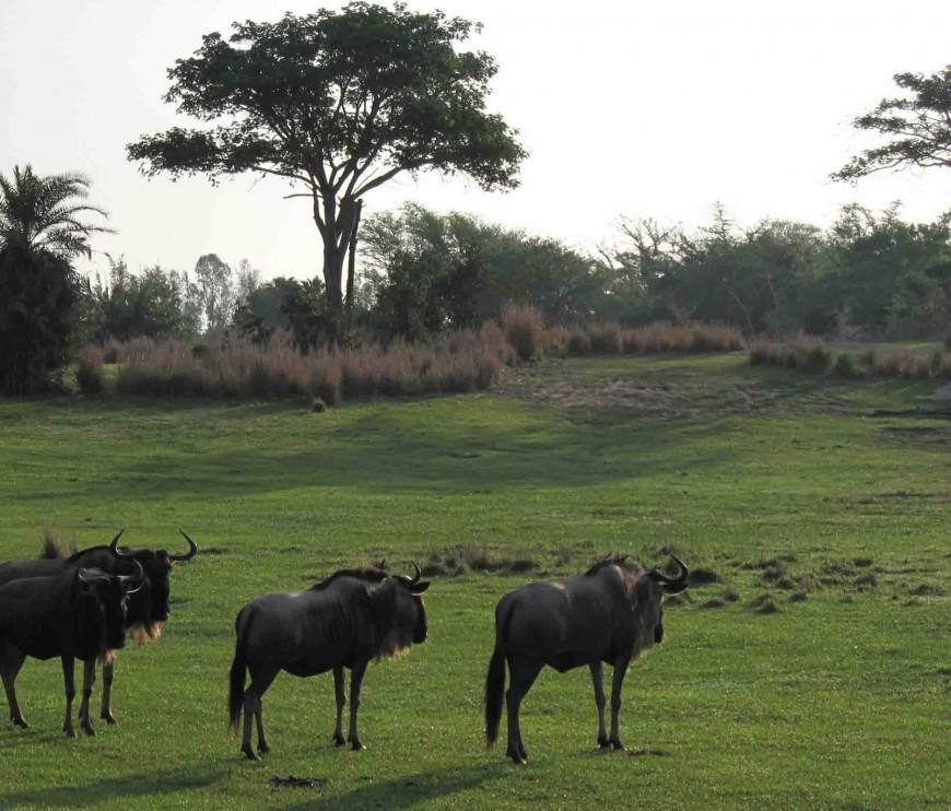 How to plan a trip to disney world - safari - http://iamsherrelle.com
