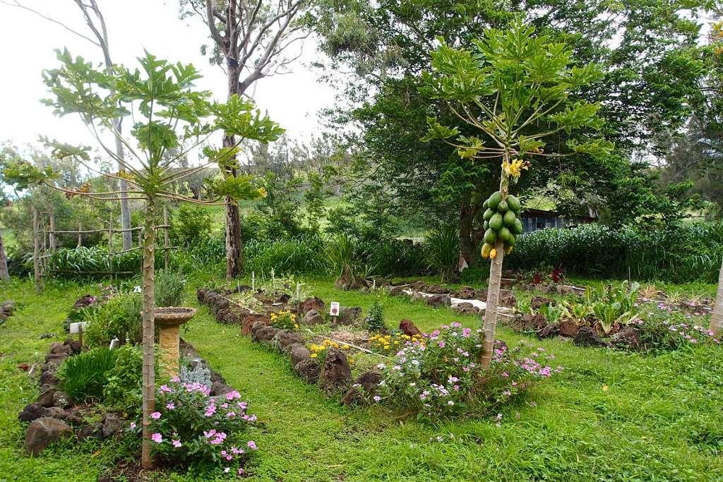 Living the good life on Puakea Ranch   North Kohala   Hawi   Big Island   Hawaii - Sherrelle