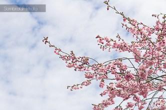 flores flowers spring primavera
