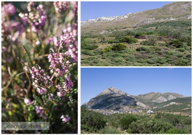 somiedo asturias plants  plantas verano sombragf