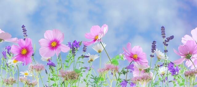 gardening for emotional balance