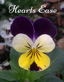 Heartsease – Gentle Heart Healing