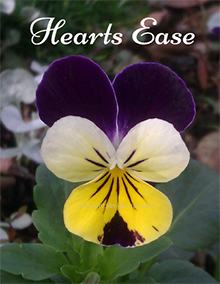 Heartsease – Gentle Heart Healing
